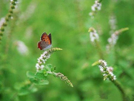 201679__butterfly-green_p