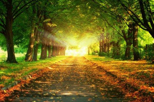 135904__trees-sunset-leaves-road-nature-landscape-beautiful-majestic-trees-sunset-leaves-the-road_p