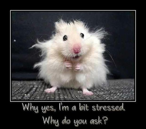 Αποτέλεσμα εικόνας για funny anxious