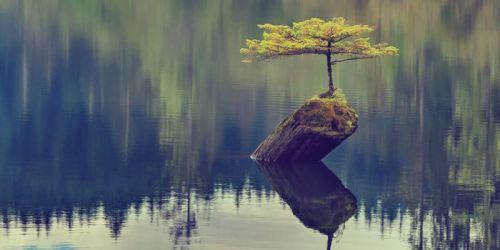 resilience tree.jpg